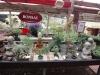 Bonsai-Plümschen
