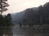 tote Bäume im See