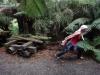 Tinka zieht Holz durch den Wald