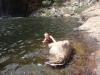 und das Wasser schweinekalt