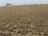 Überbleibsel wenn Krabben sich Behausungen im Sand bauen