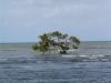 Etwas nördlich vom Cape Tribulation stehen Mangroven im Meer
