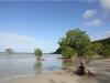 Mangroven bis ans Meer...