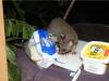 War Frog nicht da, kam das Possum und freute sich über unser Essen