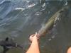 Fish feeding am doctors Gully