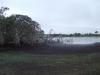 Der See mit den Fröschen