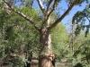 Tinka mag Boab Trees!