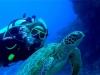 Tinka und die Chillkröte