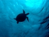 Chillkröte... diesmal ohne Tinka