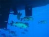 Fische unterm Boot... wie man sieht