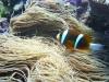 Nemo... Check!