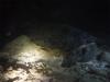 pennende Riesenschildkröte beim Nachttauchgang