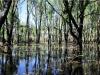 Sumpfgebiet direkt an der Straße nach Ubirr