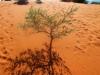 Ein Baum trotzt den widrigen Umständen
