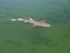Ein kleiner Hai im Aquarium bei Denham