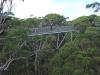 Der tree-top-walk