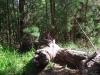 Jana im Baum-boot