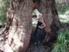 Der Weg durch den Baum